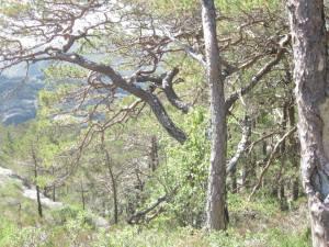 Ulvaskogen